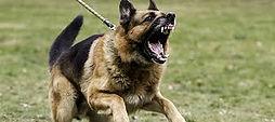 agressive dog.jpg