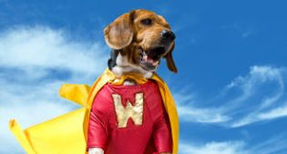 hero-dog-300x162.jpg