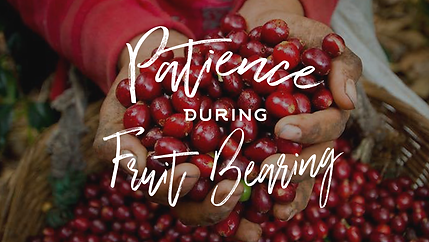 Patience In Fruit Bearing.png