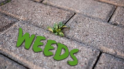 Weeds (web).png