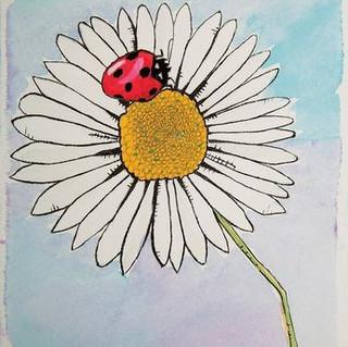 Lady Bug's Daisy.JPG