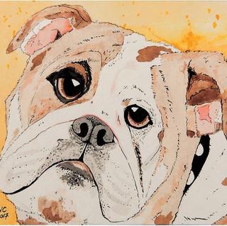 Dougie wants a doggie biscuit.JPG