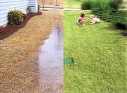 french-drain-before-after_edited