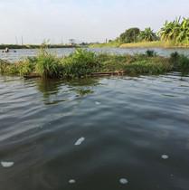 大 生 浮 島 Tai Sang Floating Island