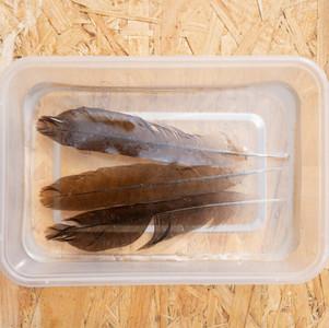 羽毛 Feathers