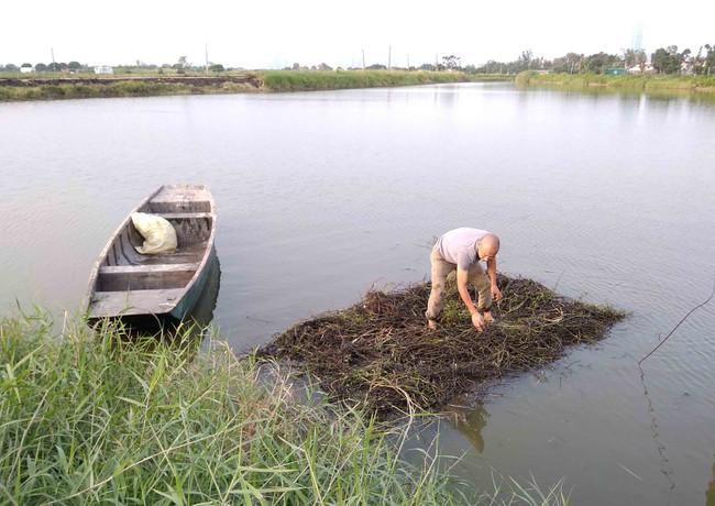 4. 何遠良將塘邊草移植到浮島上,讓植物自然生長_2.JPG.JPG 的副本.j