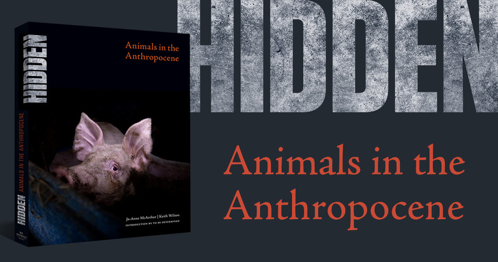 Wow! My work is part of the book HIDDEN, by Jo-Anne McArthur and We Animals. HIDDEN: Animals in the Anthropocene is an unflinching book of photography about our conflict with non-human animals around the globe. Through the lenses of thirty award-winning photojournalists, HIDDEN shines a light on the invisible animals in our lives; those with whom we have a close relationship and yet fail to see. They are the animals we eat and wear. The animals we use for research, work, and for entertainment, as well as the animals we sacrifice in the name of tradition and religion. HIDDEN is a historical document, a memorial, and an indictment of what is and should never again be.  HIDDEN needs to be seen by as many people as possible, and this can only happen with your support. 