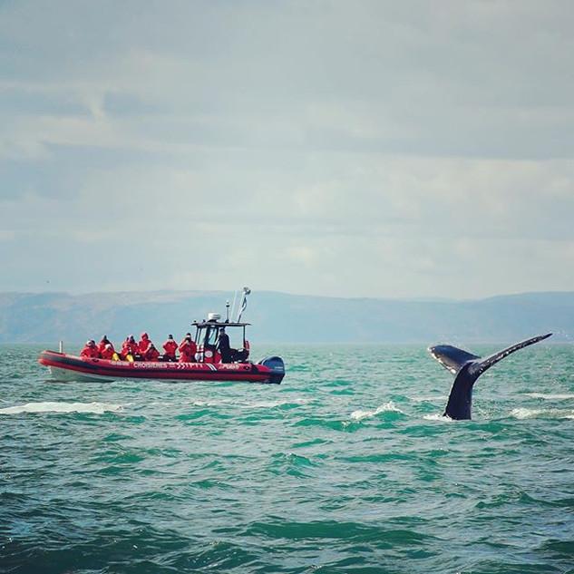 Les baleines sont toujours au Québec en