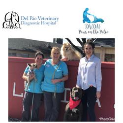 Pet Therapy Del Rio