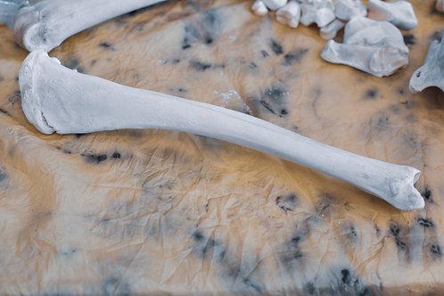 Ethically Sourced Elk Bone