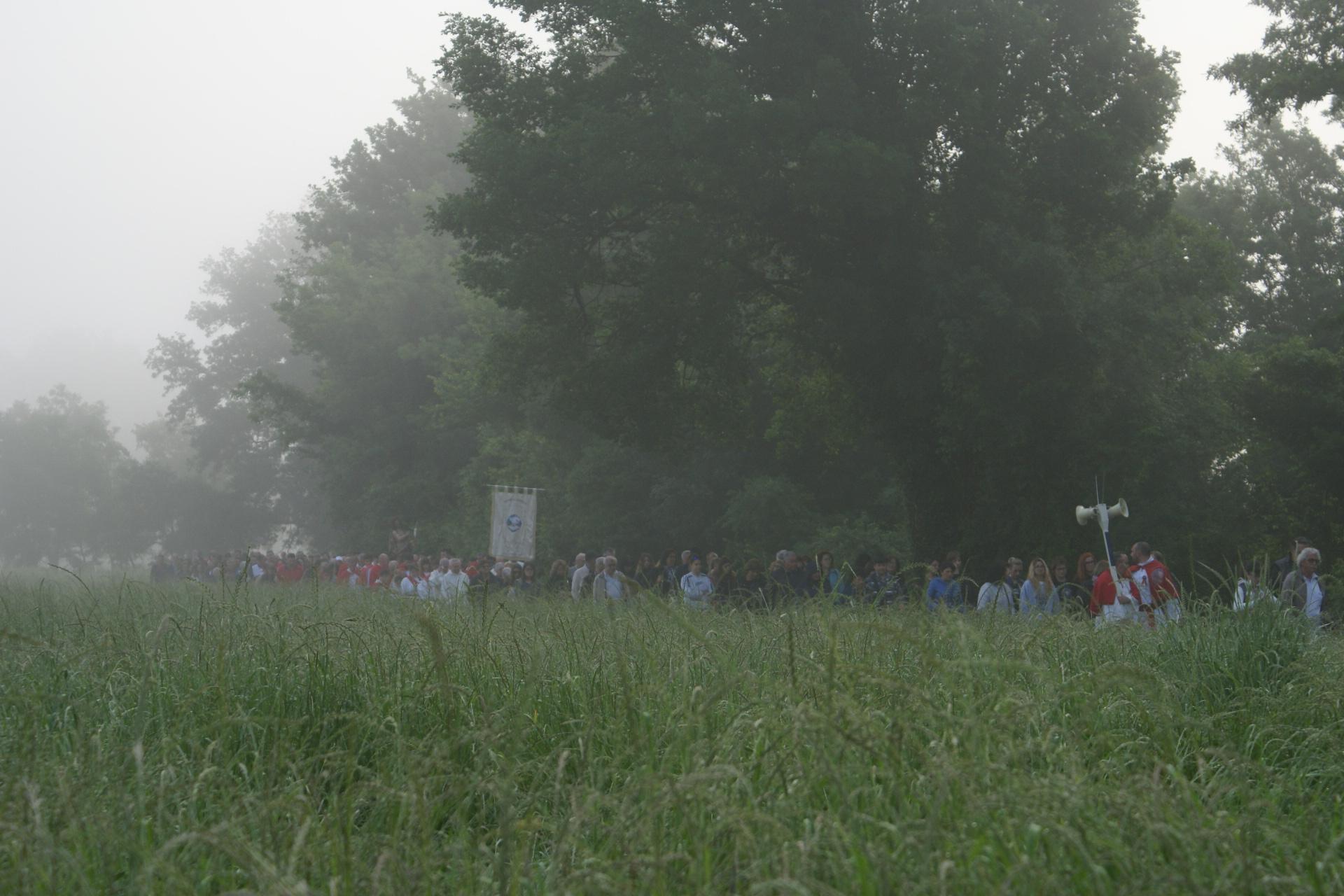 processione 116