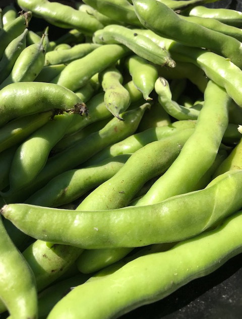 May 2019 Fava Beans