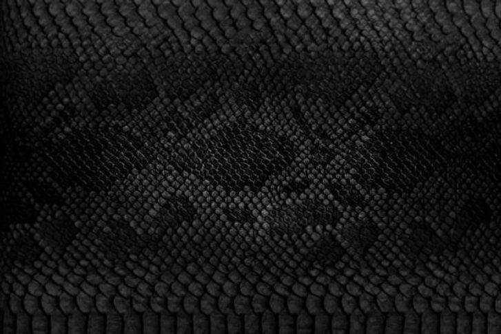 Snake_edited.jpg