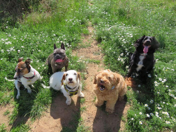 Mucky Paws Dog Care