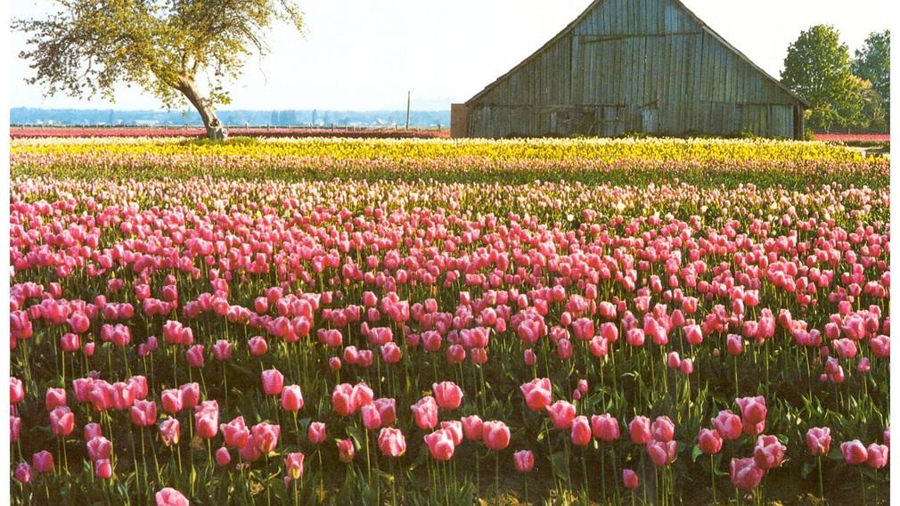 Family Farm in Washington