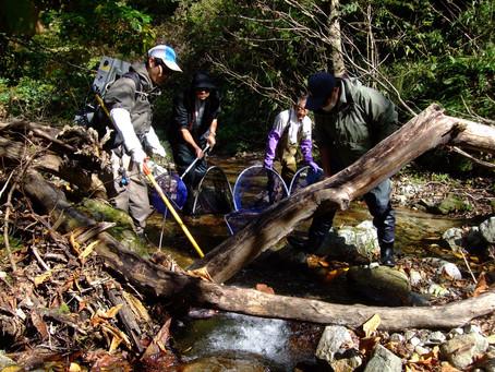 綱木川魚類調査写真