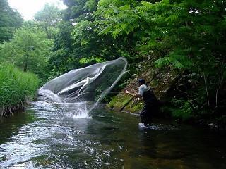 綱木川・大樽川魚類調査