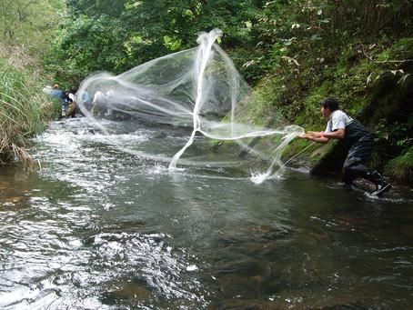 綱木川魚類調査風景