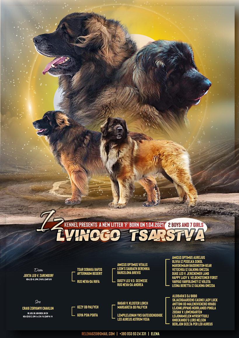 Щенки 2021   Львиное царство   Леонбергер   Leonberger   Puppies 2021   Lvinoe tsarstvo  