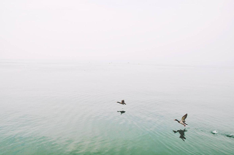 Patos sobre el lago