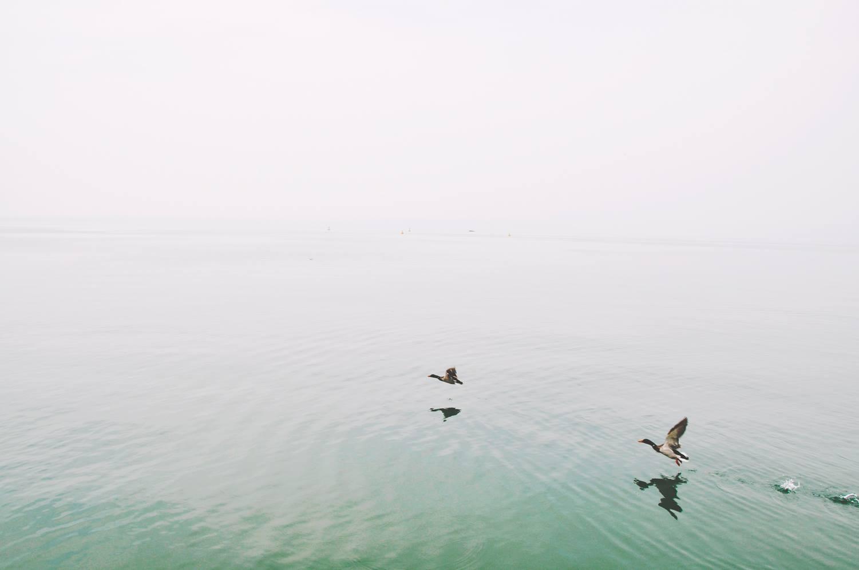 호수에 오리