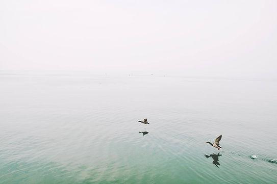 Ducks Over the Lake