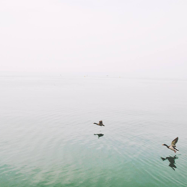 Enten über den See