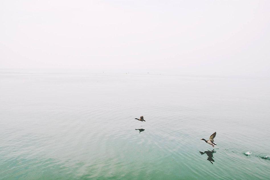 Утки над озером