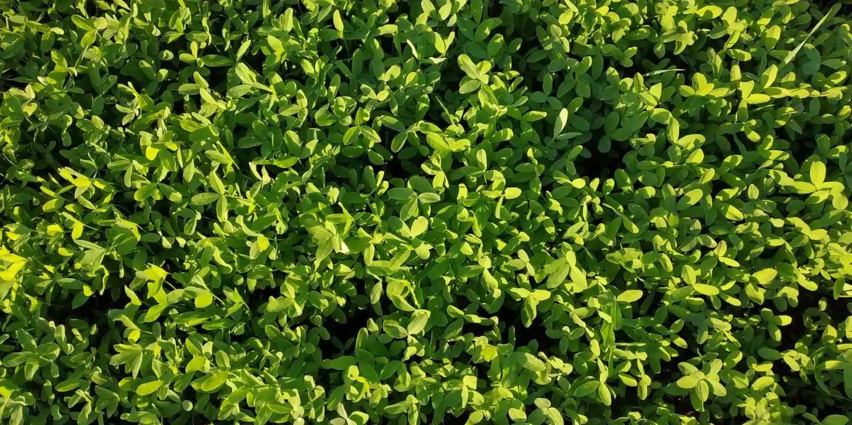 חורף.חמישים גוונים של ירוק. Winter time. Fifty shades of green.