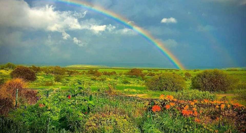 מרץ 2020. עונת הקשתות בכפר קיש. אמיתי. March 2020. The rainboe sason at Kfar Kisch.An .authentic picture