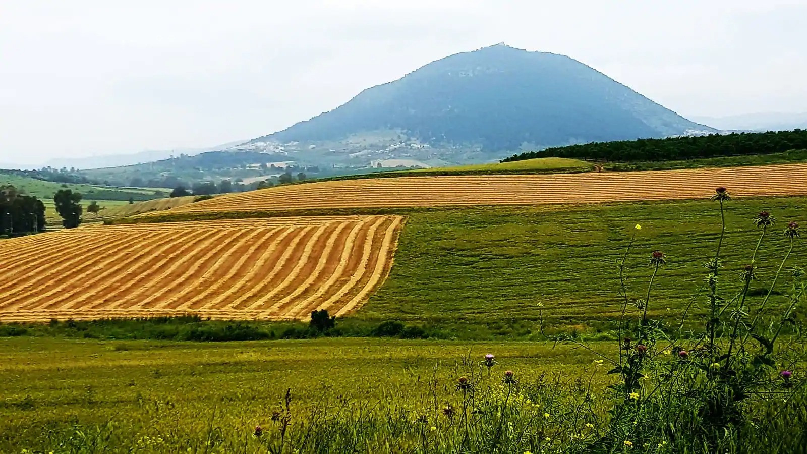האזור הכפרי הנהדר שלנו. Our wonderful rural area.
