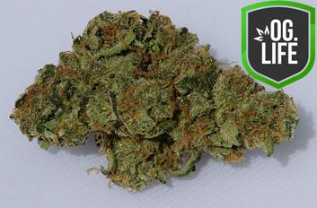 GXL Sour Tangie 2 - OG.Life - cannabis m