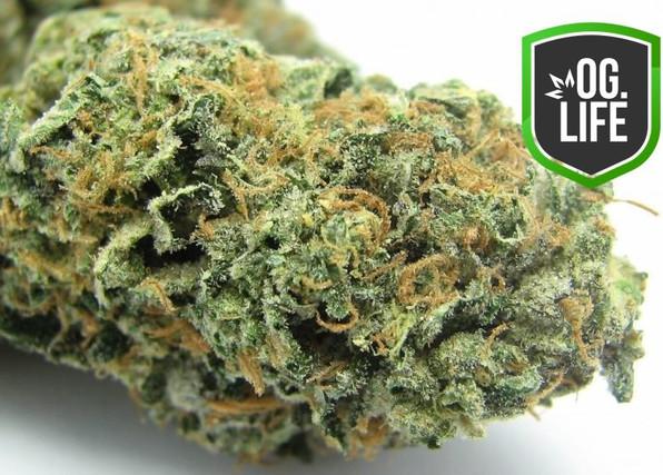 Green Sherbet - OG.Life - cannabis marij
