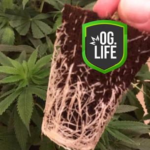N-Lab-Logo-Cannabis-and-Marijuana-Suppli