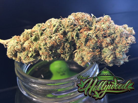 Orange Crush {p.Hollyweed} Sativa dominant hybrid