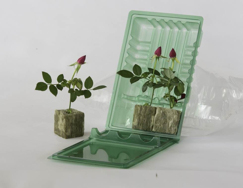 clone shipper cannabis containers