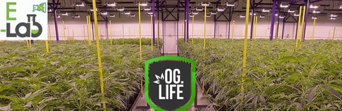 E-Labs-banner-Rows-of-cannabis-plant-pro