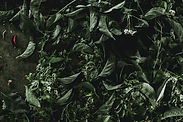 fresh-mixed-herbs.jpg