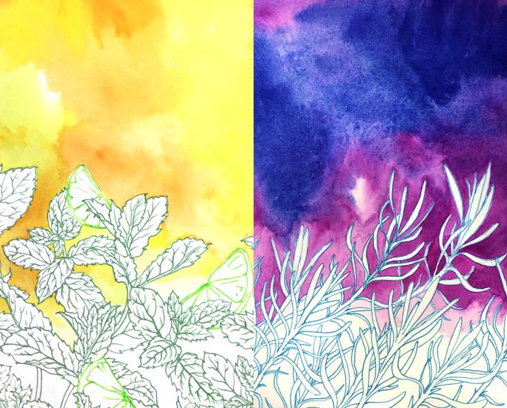 Citrus/Mint and Lavender/Cotton Lavender