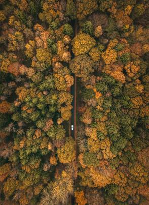 Skoven fra oven   Baaring Skov