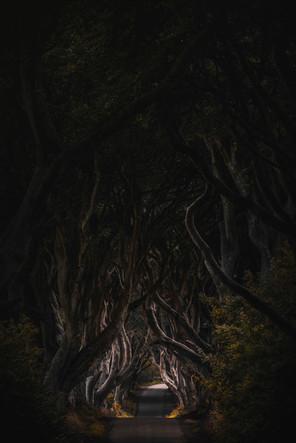 The Dark Hedges | Nordirland