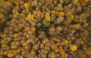 Den grønne hund i skoven | Løverodde