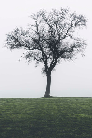 Ensomt træ | Baaring Vig