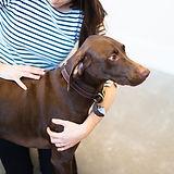 Canine Chiropractor_edited.jpg