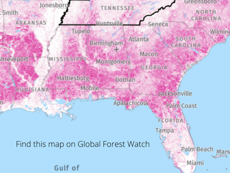 Do we (really) need more trees in TN? (Yes)