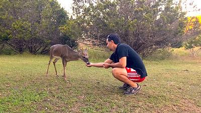 Deer Food.jpg