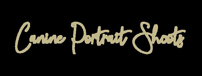 Canine Portrait Shoots.png