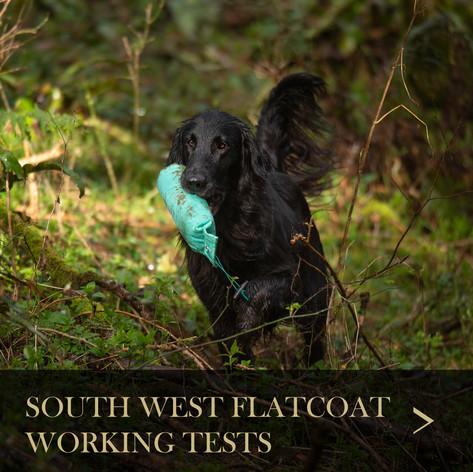 SW Flatcoat.jpg