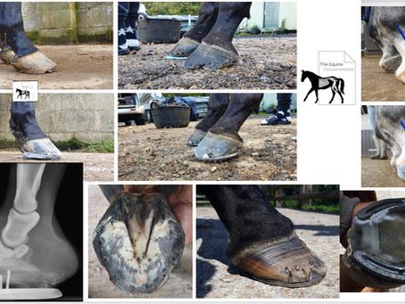 Ex-Racehorse feet