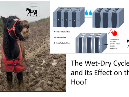 Wet-Dry Cycles - Effect on the Hoof